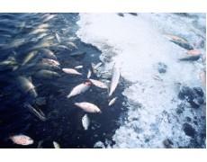 Waspada Terhadap Perubahan Suhu Di Tambak Ikan Anda, Ini Cara Mengatasinya!