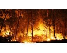 Weather Station mencegah Kebakaran Hutan