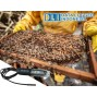 Pentingnya Monitoring Suhu Pada Sarang Lebah